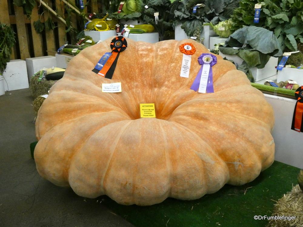 Prize-winning pumpkin, Alaska State Fair, Palmer
