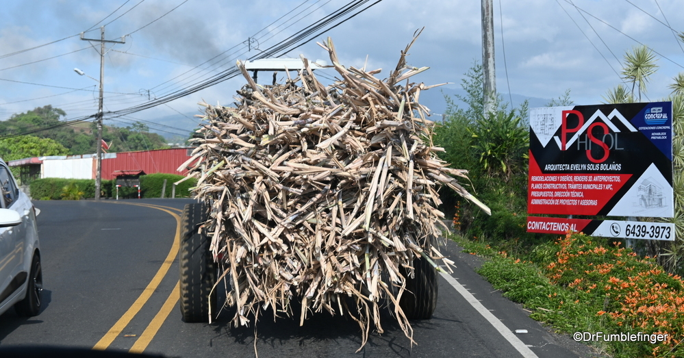 Huge load of dried sugar cane stalks, Costa Rica