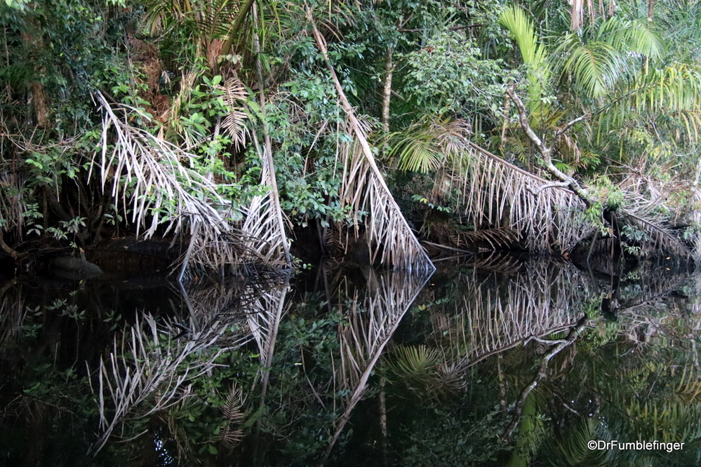 Reflections of the jungle, Tortuguero National Park
