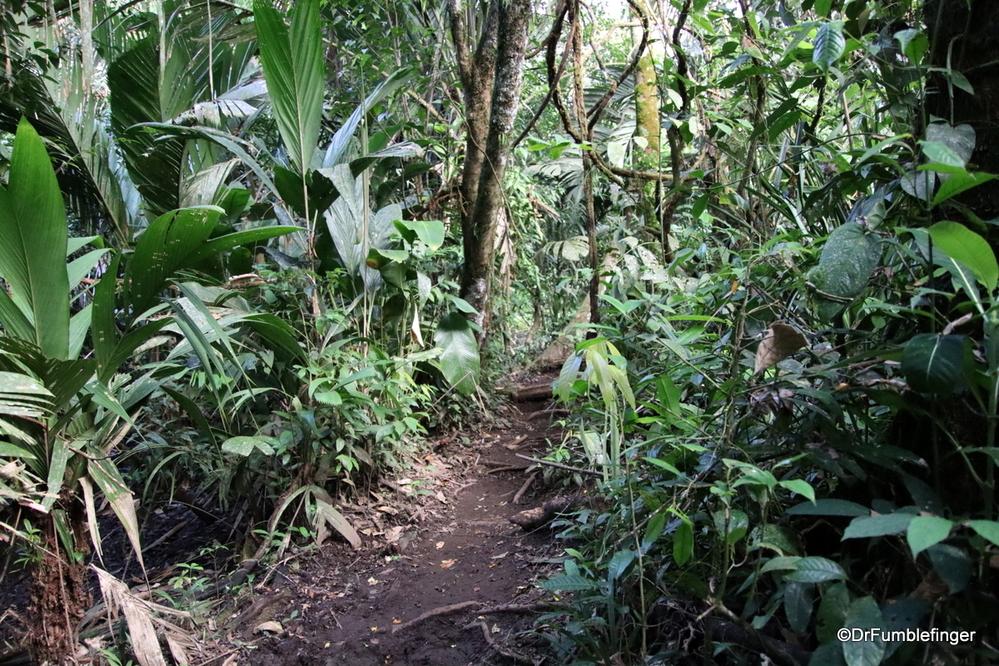 Caribbean coastal jungle, Costa Rica