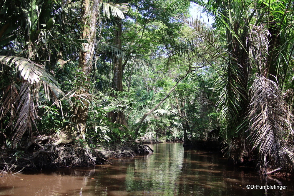 Deep in the heart of Tortuguero National Park, Costa Rica