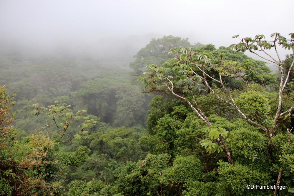 The legendary Cloud Forest of Monteverde, Costa Rica