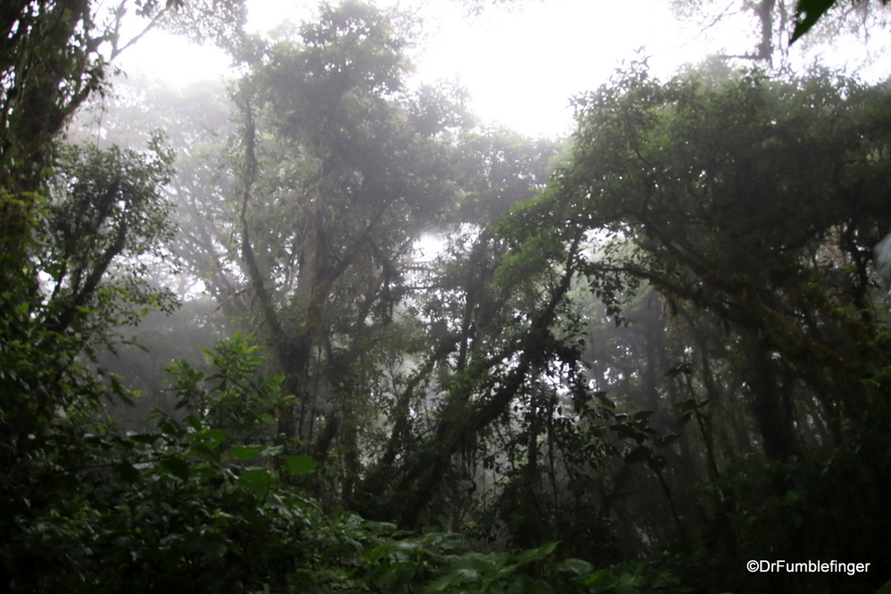 The legendary Cloud Forest of Monteverde, Costa Rica