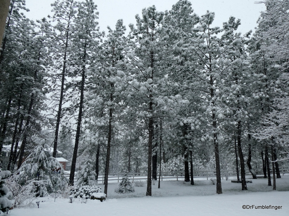 Fresh snow to welcome Spring!  Spokane, Washington