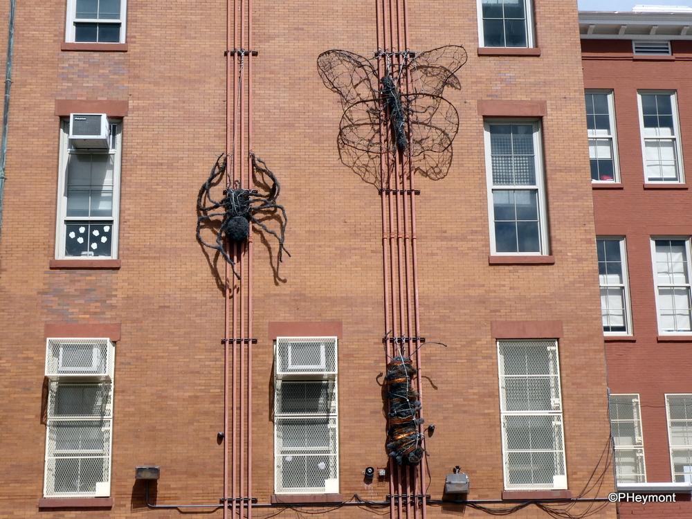 The Eensy Weensy Spider, Brooklyn