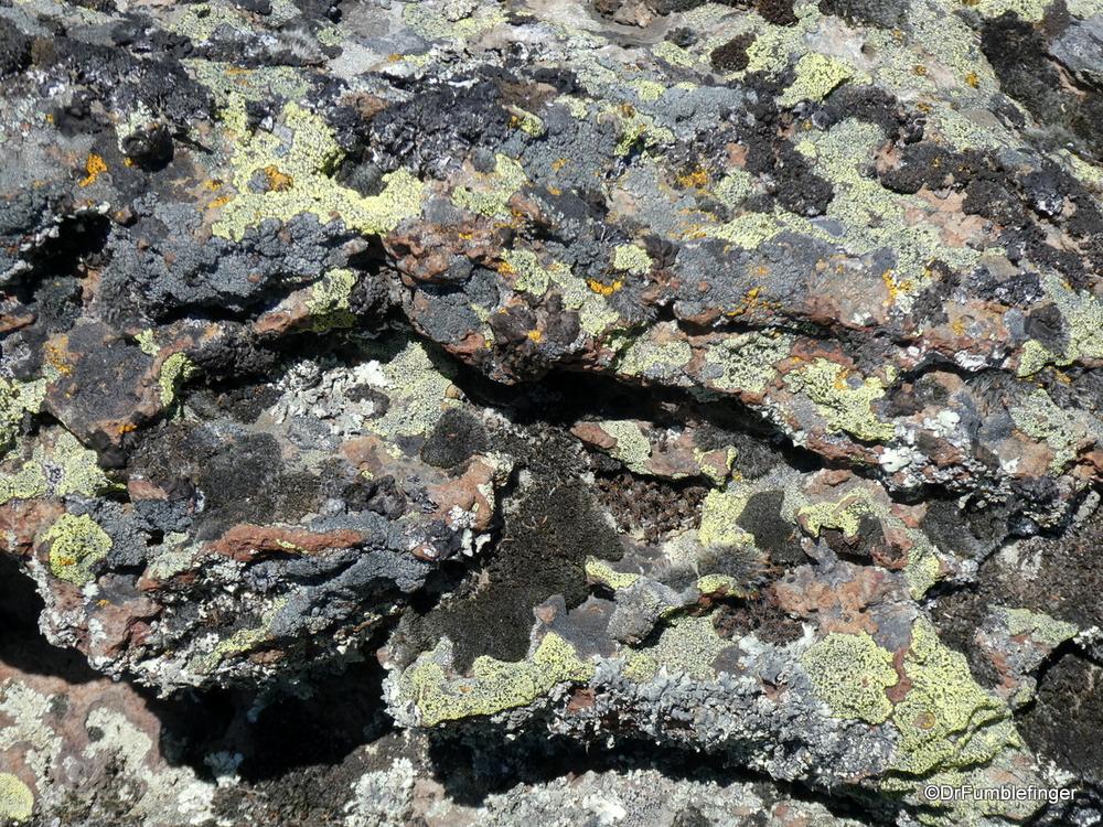 Colorful lichen pattern, Tolo Lake