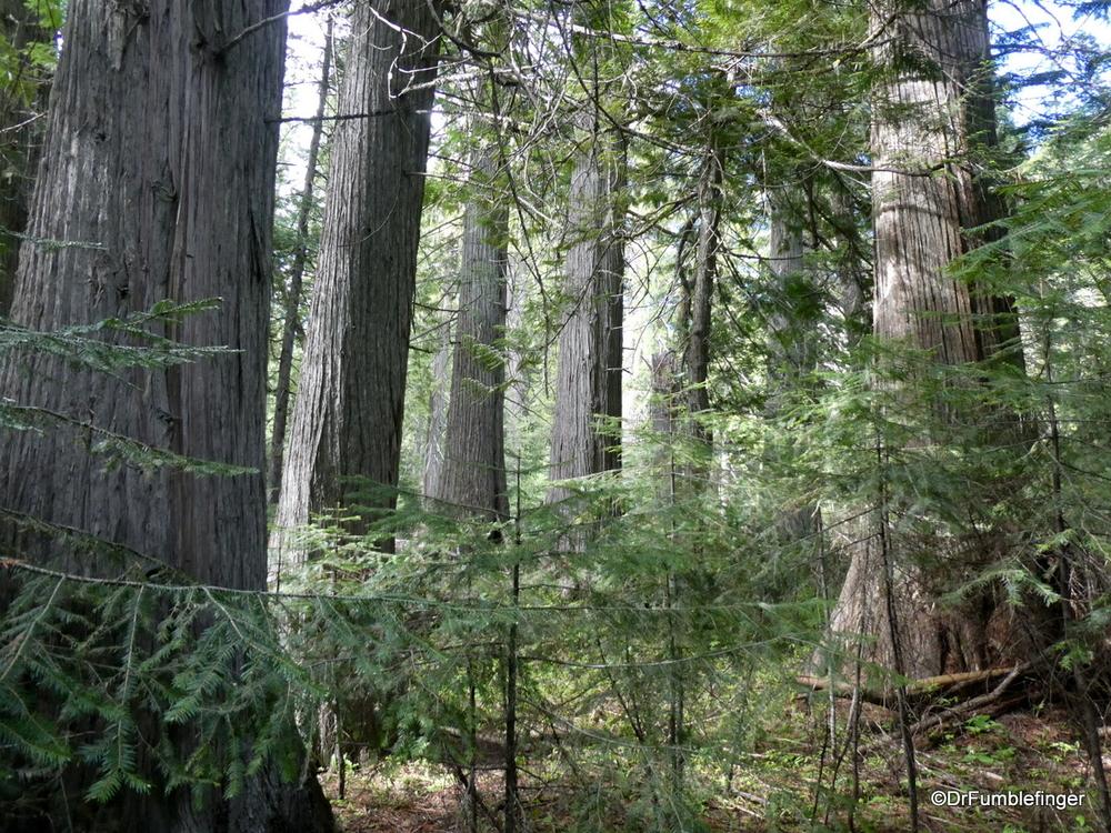 DeVoto Grove of Old-growth Cedars