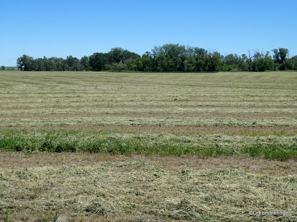 Freshly cut field of grass and alfalfa