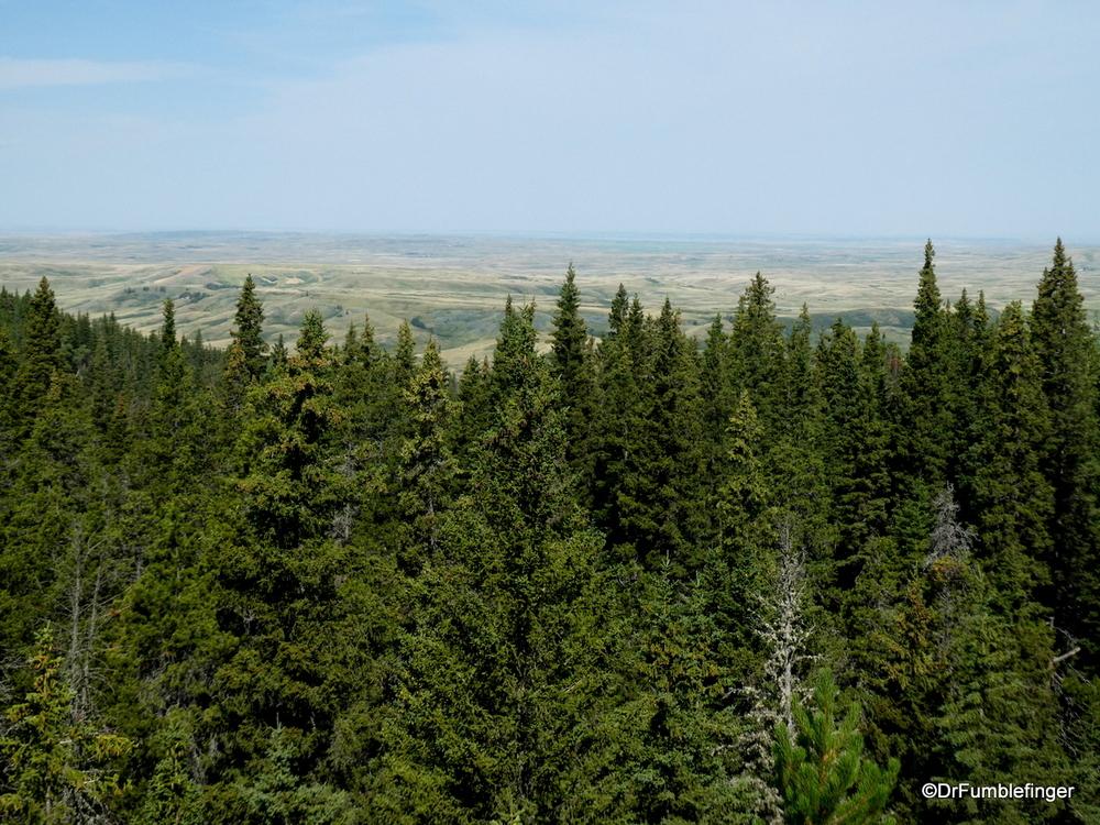 Horseshoe Canyon Viewpoint, Cypress Hills Interprovincial Park