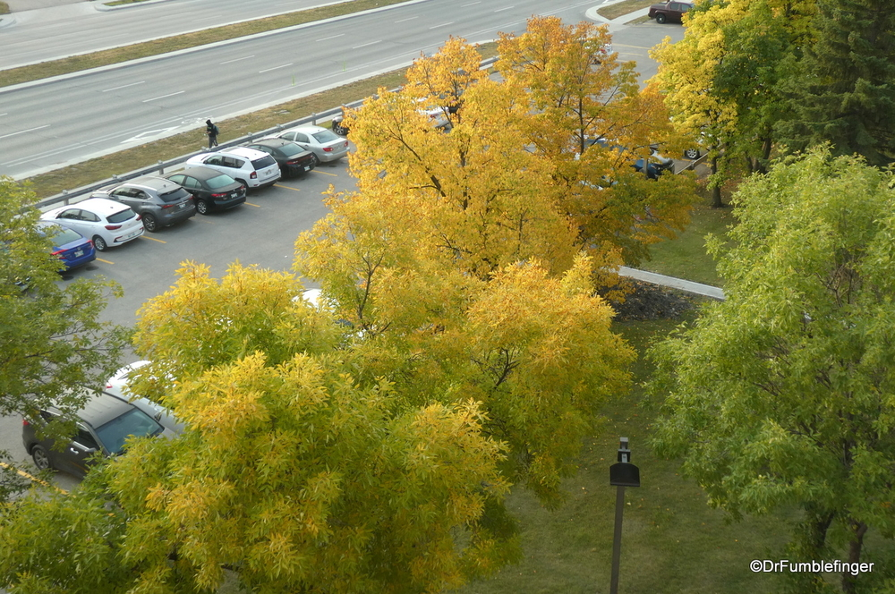 Fall colors already displayed in Winnipeg