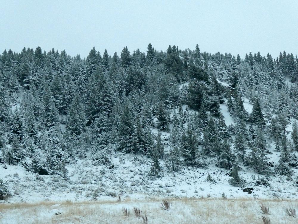 Early October snow, near Billings, Montana