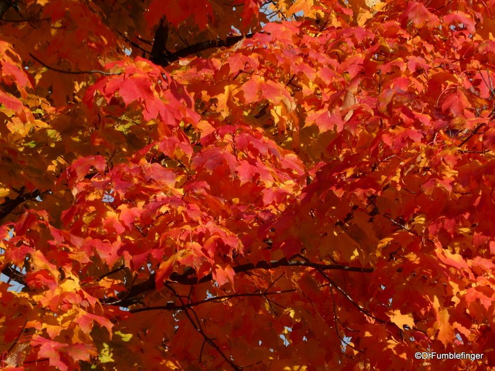 Fall colors, Evanston