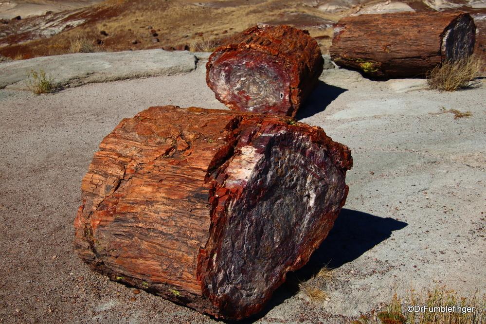 Petrified wood, Petrified Forest, Arizona