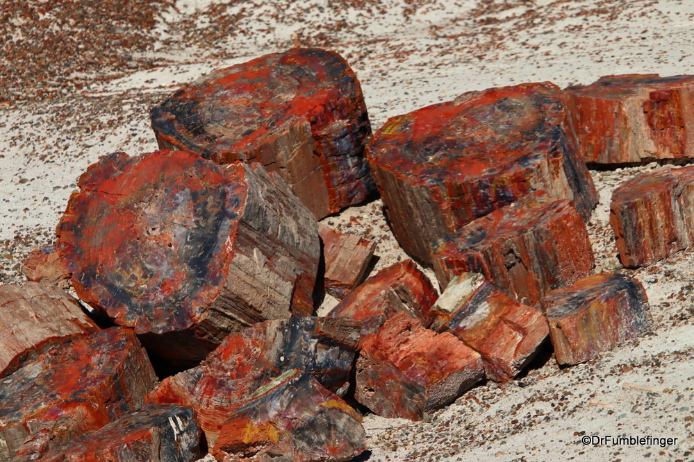 Petrified wood, Petrified Forest, Arizona