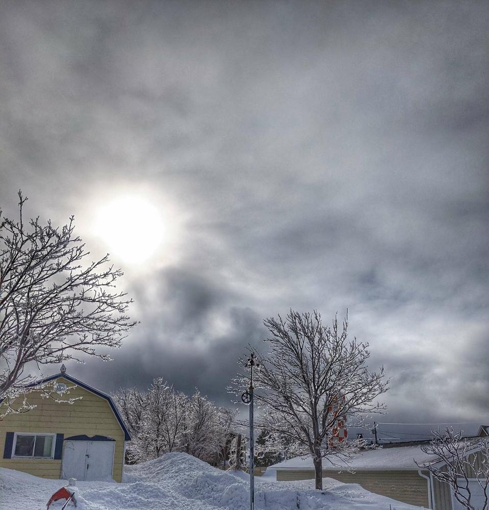 Ice Trees, Caraquet, New Brunswick