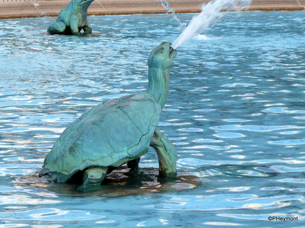 Spouting Turtle, Philadelphia