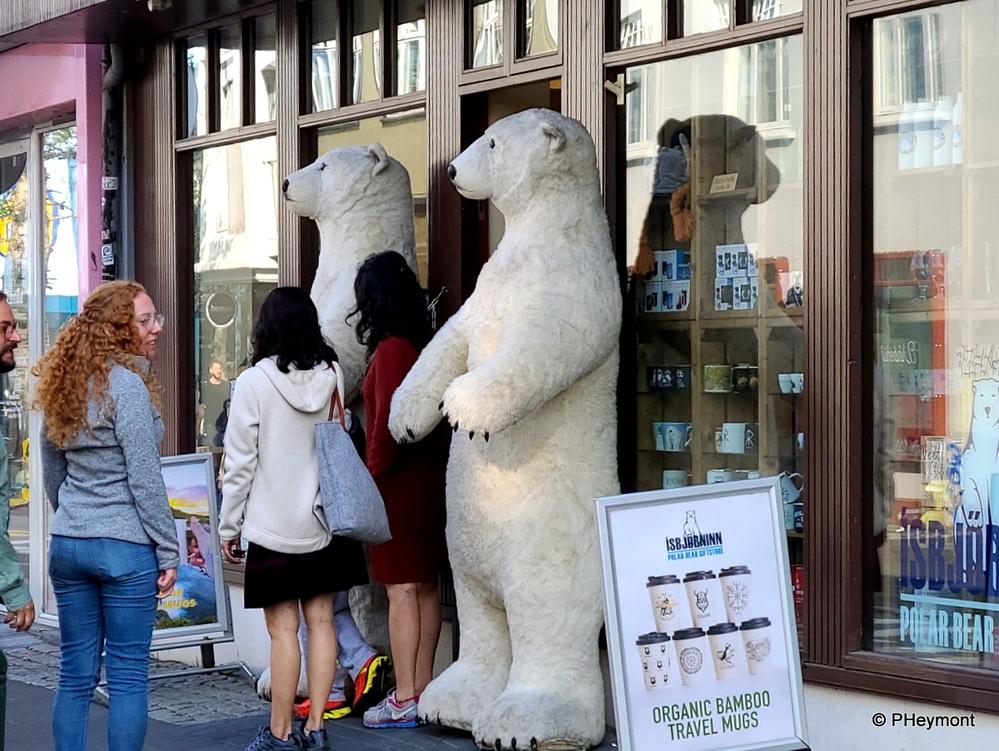 No Polar Bears in Iceland?