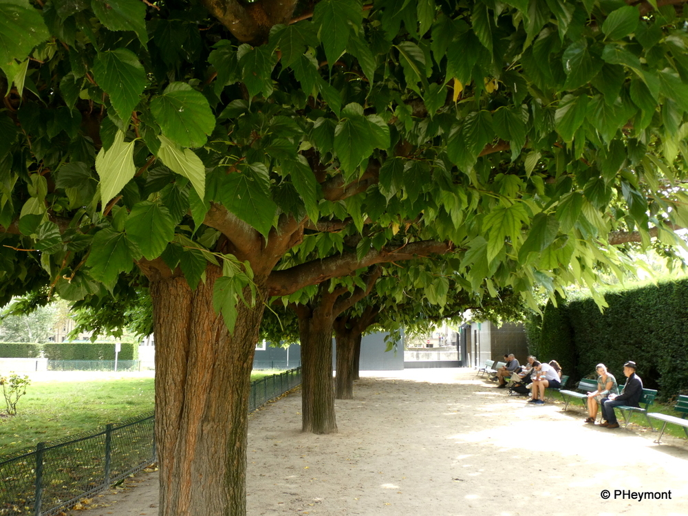 Shade Trees, Place Ile-de-France