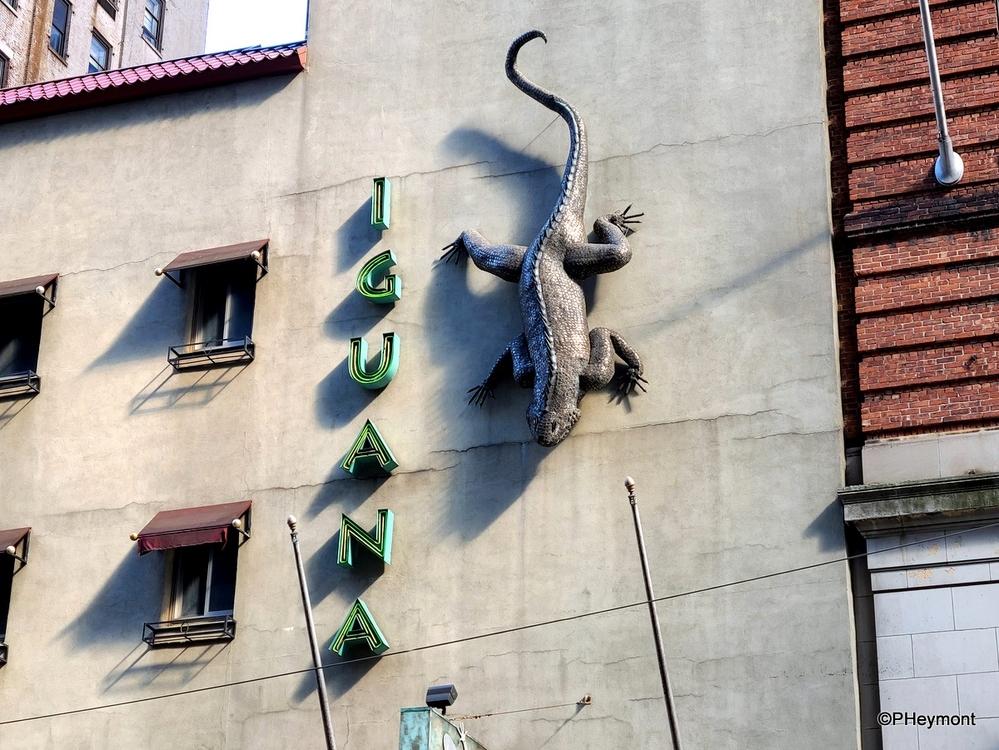 City Lizard